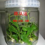 输液瓶生产厂家供应批发商出厂报价图片