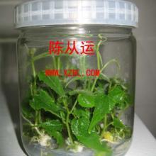 供应福建漳州培养瓶菌种瓶生产厂批发