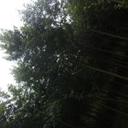 扁桃米径5到10公分图片