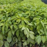 秋风种苗供应商图片