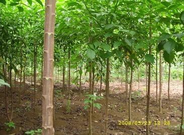 秋风种苗供应商图片/秋风种苗供应商样板图 (2)