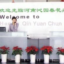 供应郑州绿化工程