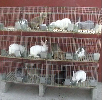 宠物兔笼价格_商品兔笼