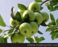 山东苹果价格供应山东金帅苹果批发