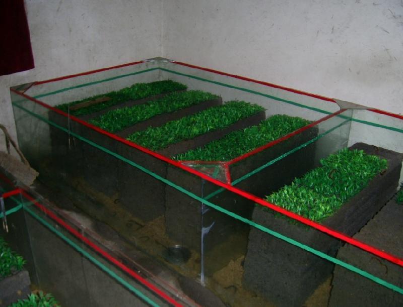 供应上海蝎子上海黄粉虫上海蜈蚣