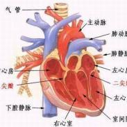 高血压性心肌病的中药治疗心肌病图片