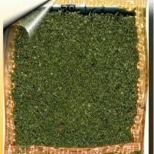 供应番泻叶/泻叶/泡竹叶/植物原药材