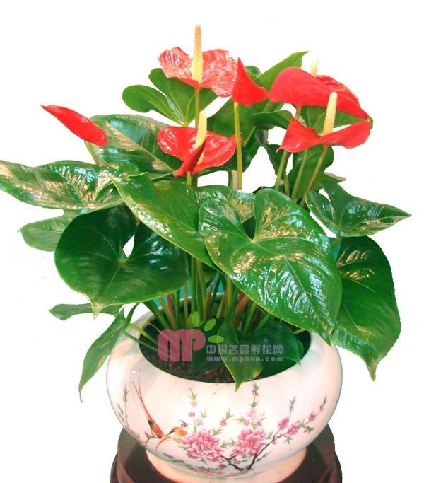 最常见的绿植名称图片图片 绿植图片及名称大全,室内绿植图片及名称