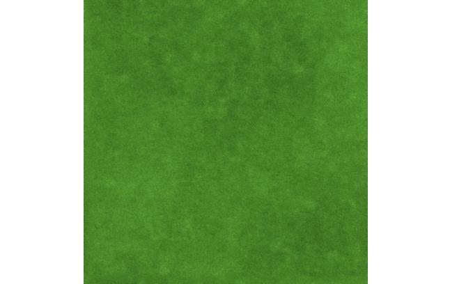 供应湖南地区出卖马尼拉草皮 高清图片