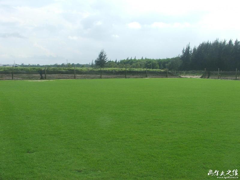 湖南郴州马尼拉草皮价格生产供应商 供应马尼拉草皮高清图片