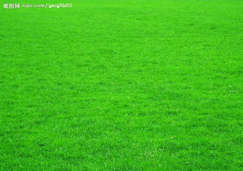 马尼拉草皮销售基地生产供应西安马尼拉草坪 高清图片