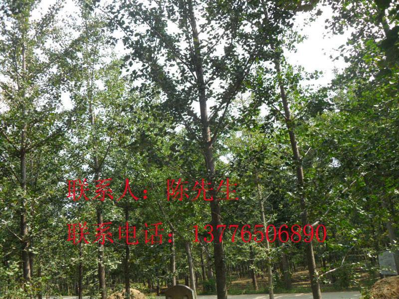 陈氏雪松绿化园艺场