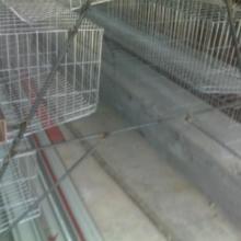 供应肉鸡设备  肉鸡设备的价格  河北俊杰养殖设备肉鸡生产研发批发