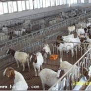 重庆-秀山肉牛养殖场图片
