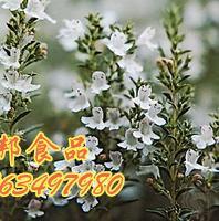 供应天然植物香料百里香