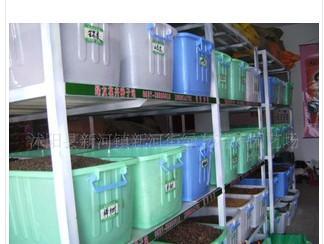 供应绿化苗木种子批发各种苗木乔木灌木图片