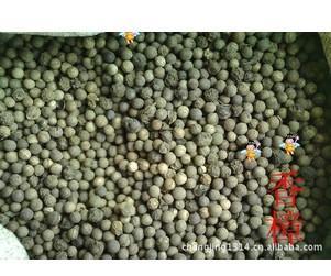 供应香樟种子批发采购买卖价格图片