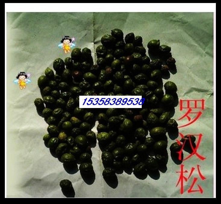 供应罗汉松种子价格图片