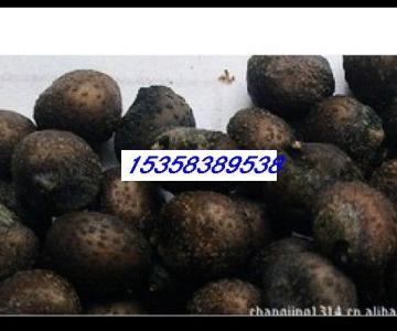 供应江苏罗汉松种子价钱图片