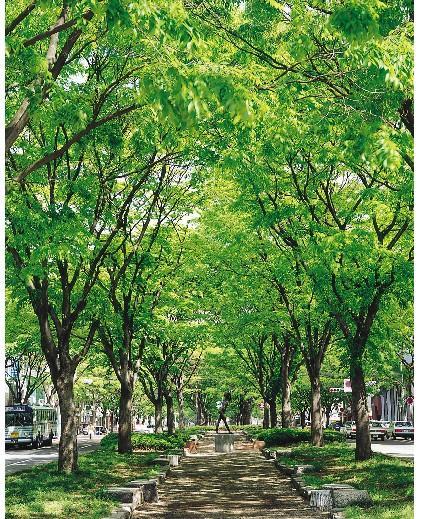 供应榉树种子供应商图片