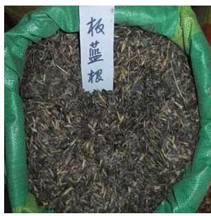 供应板蓝根种子播种方法种植栽培技术图片