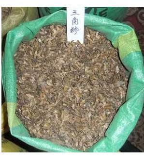 供应枫树种子三角枫种子五角枫种子图片
