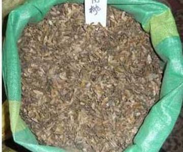 供应三角枫种子图片