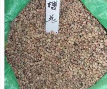 供应樱花种子价格图片
