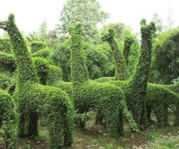 供应刺松盆景刺松手工造型动物造型盆景图片