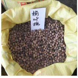 供应榆叶梅种子价格图片