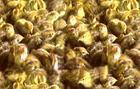 本养殖场常年供应大中小鹌鹑苗,鹌鹑笼具,回收鹌鹑蛋,淘汰鹌鹑批发