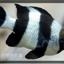 供应海水观赏鱼供应以及鱼缸定做批发