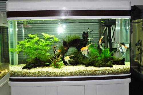 广东深圳淡水生态鱼缸 水草水族箱 缸造景生产 高清图片