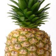 60无菌袋铁装菠萝浓缩汁图片