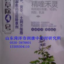 供应丹参种子+除草剂