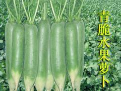 推荐秀水果萝卜种子图片