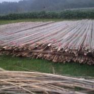 生产7米以上的大棚竹片图片
