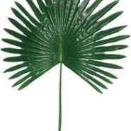 仿真葵树叶保鲜扇葵叶图片