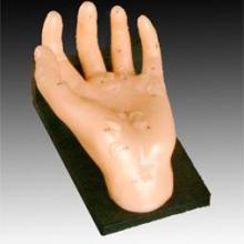 供应康谊牌保健手模型-按摩手模型-上海手穴道模型-优质手部针灸穴位模型-手针灸模型厂家