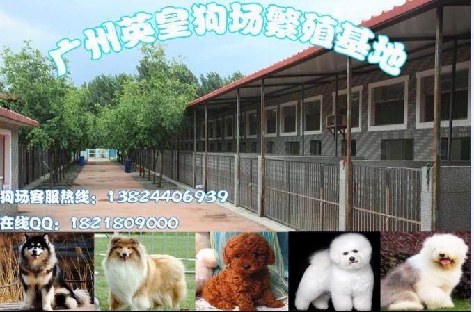 广州英皇宠物狗繁殖基地