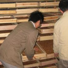 供应特种经济动物养殖大麦虫