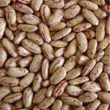 供应东北奶白花芸豆