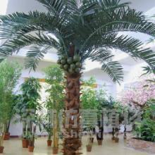 供应保鲜椰子树
