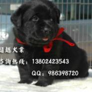 佛山去哪里有狗场卖狗广州纯种拉图片