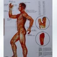 人体经络图图片