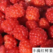 树莓品种优劣介绍