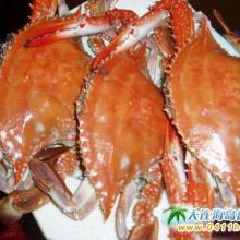 供应上海海鲜价格