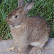 肉兔种兔兔笼