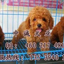 广州哪里有卖泰迪熊 玩具型泰迪熊 红泰迪熊 广州边度有卖泰迪熊幼
