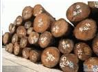 供应南美原木木材一般贸易进口报关代理